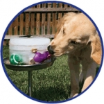 Kool Dogs Ice Treat Maker