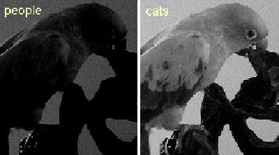 catnightvision