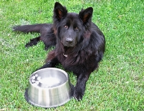 dog_lawn_water_bowl